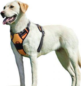 dog collars and dog harness